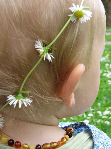Sadie daisy